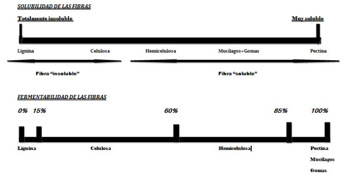 solubilidad-y-fermentabilidad-de-la-fibra
